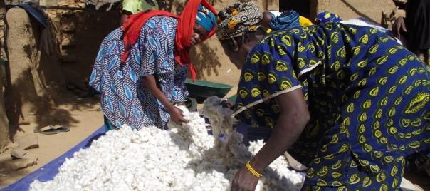 Partage du coton (5)